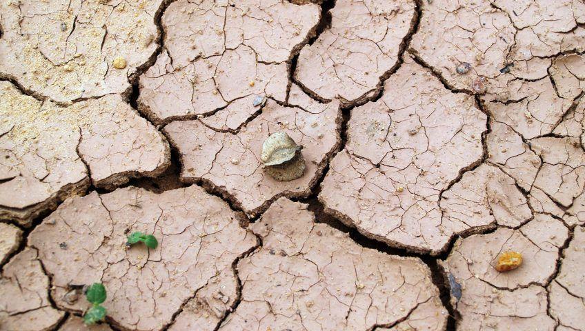 7 consecuencias del cambio climatico